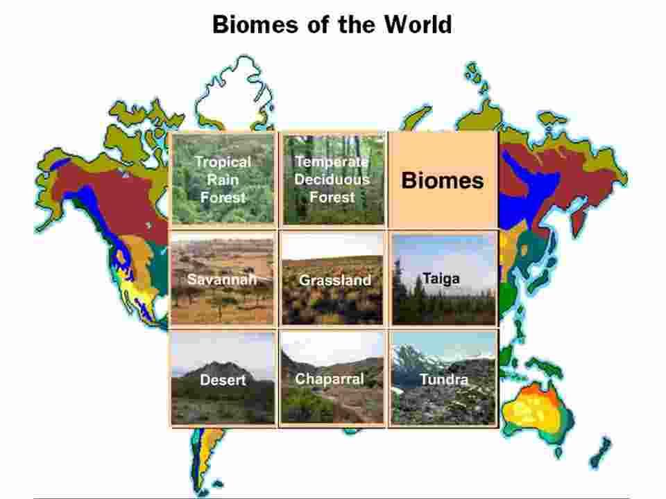 World Biomed - Len Academy