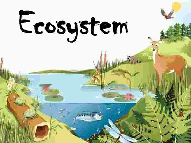 Ecosystem - Len Academy