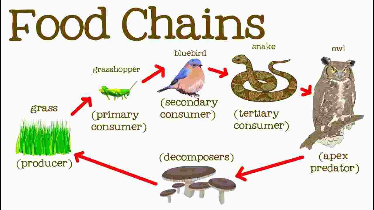 Food Chain - Len Academy