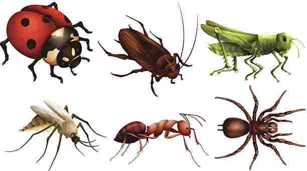Insects with Chitin - Len Academy