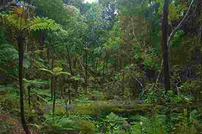 Tropical Rainforest - Len Academy