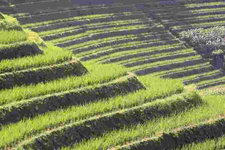 Terrace Farming - Len Academy
