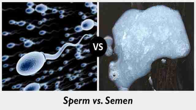 Sperm vs Semen - Len Academy