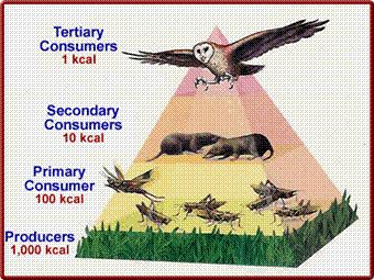 Food Pyramid - Len Academy