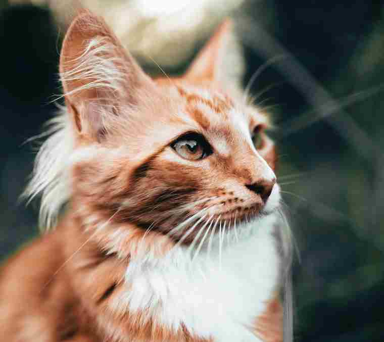 Cat furnishings - Len Academy