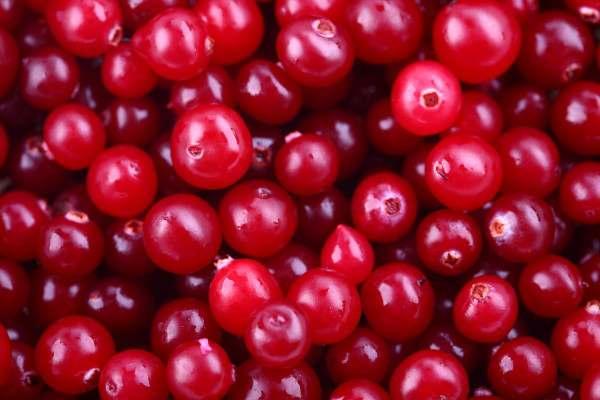 Cranberries - Len Academy