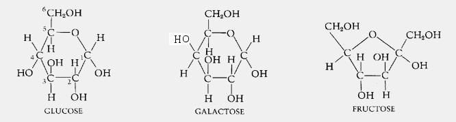Monosaccharides - Glucose, Galactose and Fructose - Len Academy