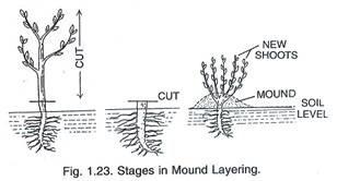 Layering - Len Academy