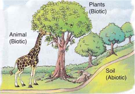 Biotic and Abiotic components of the ecosystem - Len Academy