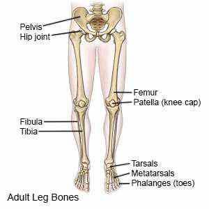 Thigh and Leg Bones - Len Academy