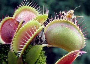 Venus flytrap - Len Academy